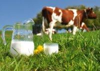 как сделать молочное ламинирование?