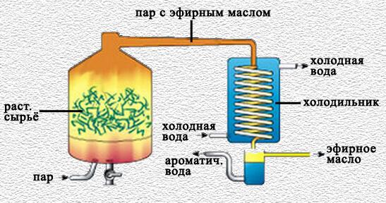 принцип производства гидролата