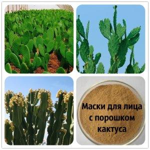 Маски для лица с порошком кактуса